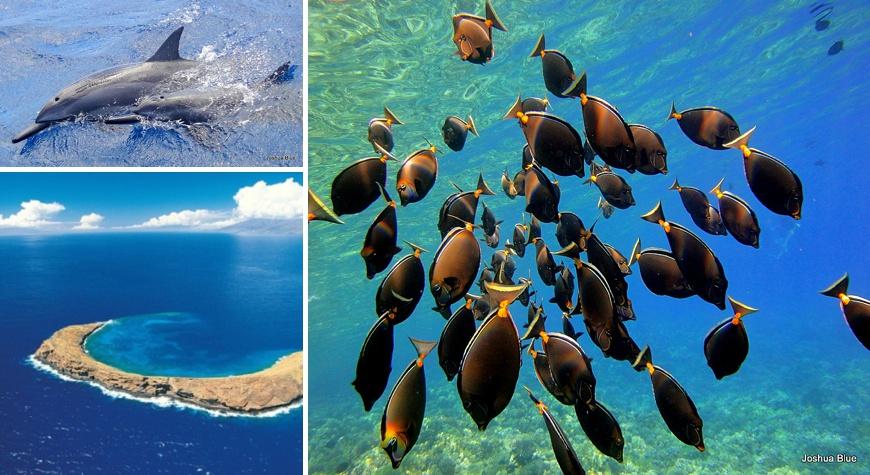 Snorkel Molokini Catamaran – Mahana Naia