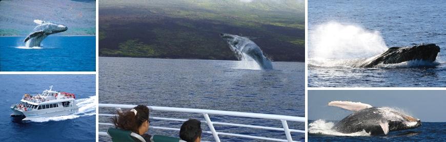 Quicksilver Whalewatch