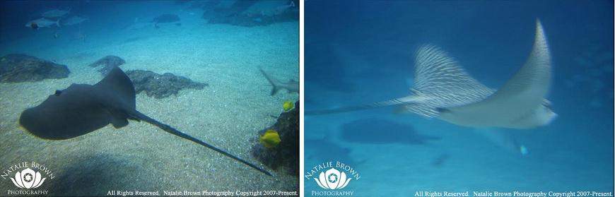 Manta Ray Night Snorkel – Sea Paradise